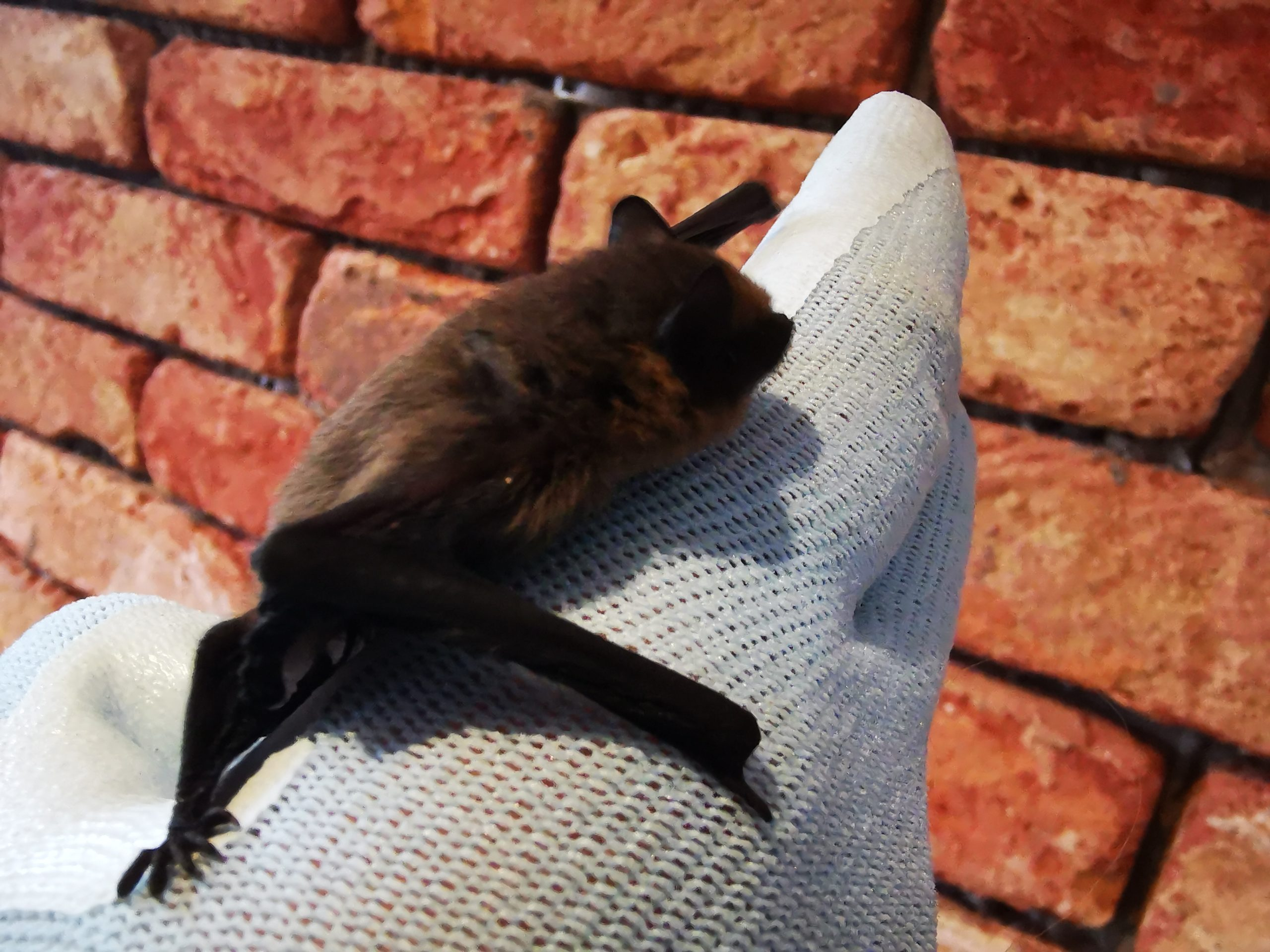 An introduction to Bats!